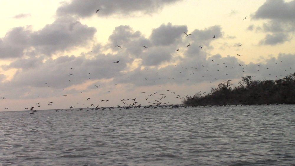 The birds completely surrounded us. It was cool and a little eerie.