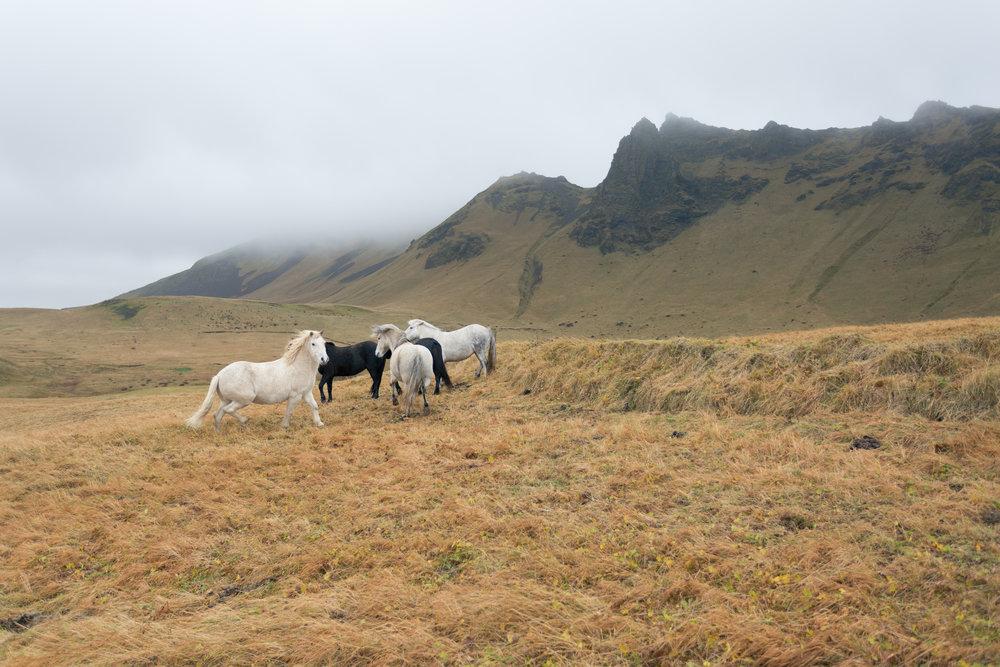 @jamesbarkleyphotography - Vik, Iceland