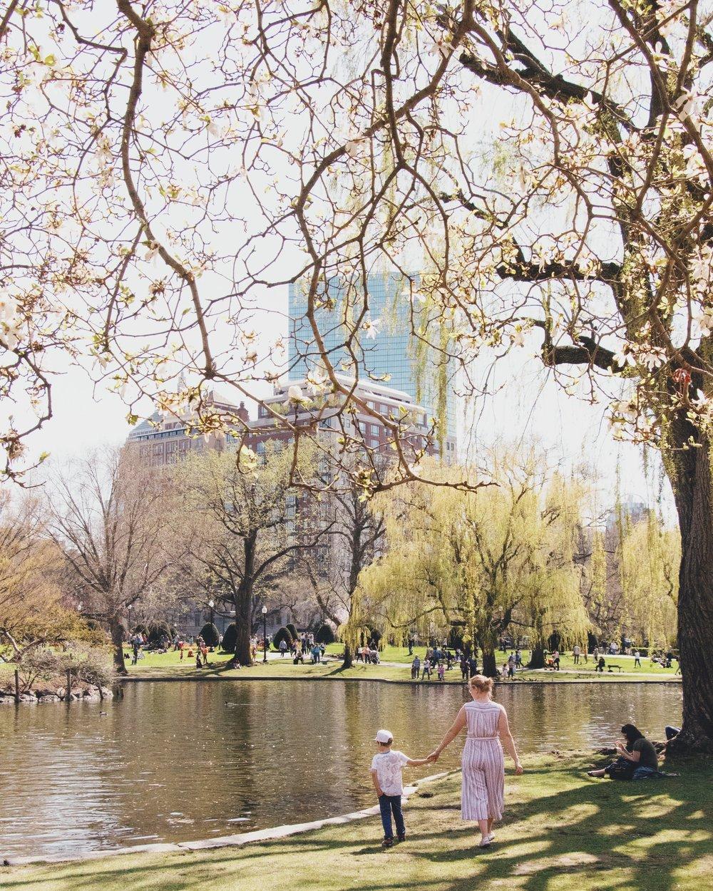@sydnie.m - Public Garden, Boston, MA