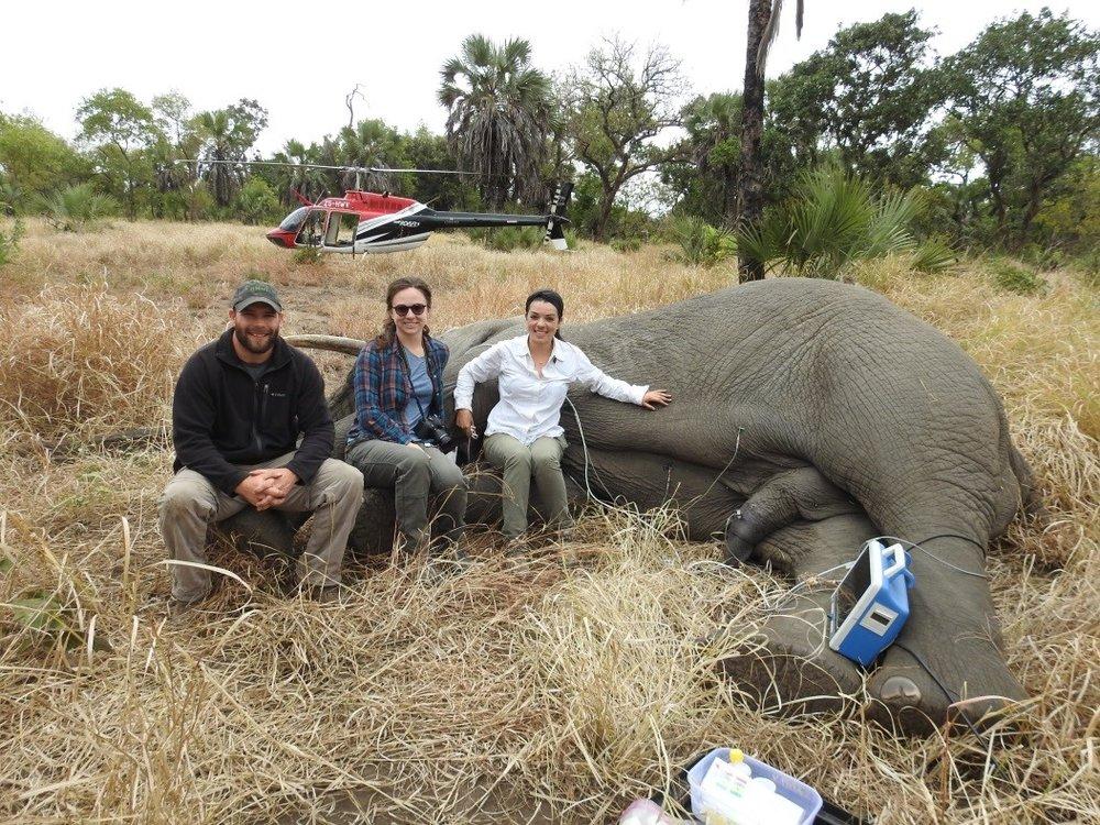 Elephant_Pic.jpg