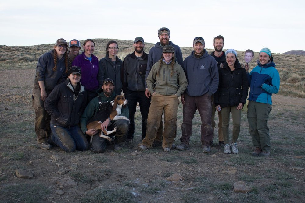 Joint deer and elk capture with the Monteith lab in Wyoming, 2017
