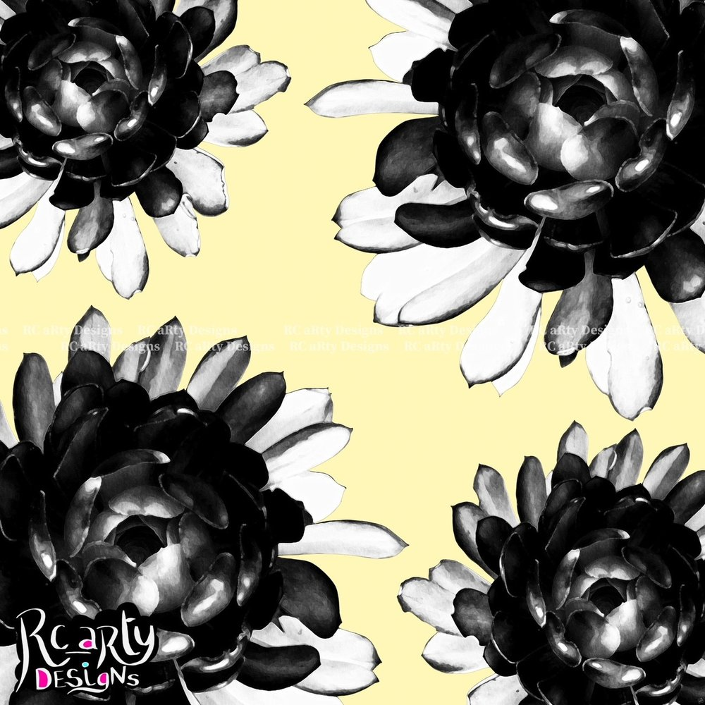 Black n White Aeonium Quartet on Pale Yellow Gallery Pics.jpg