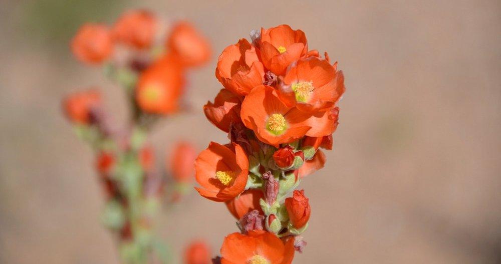 flower-62291_960_720.jpg
