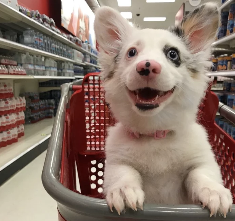 Apologies for bringing up 45. As a palate cleanser, here's that pic of the puppy who loves a trip Target as much as I do.