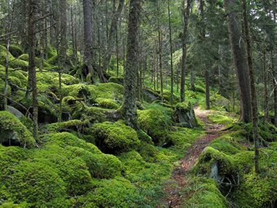 Great Smoky National Park in Tennessee