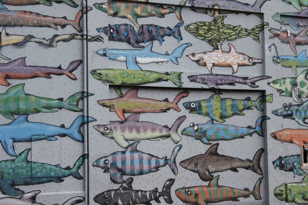 Shark Wall - Cable Street, Te Aro, Wellington