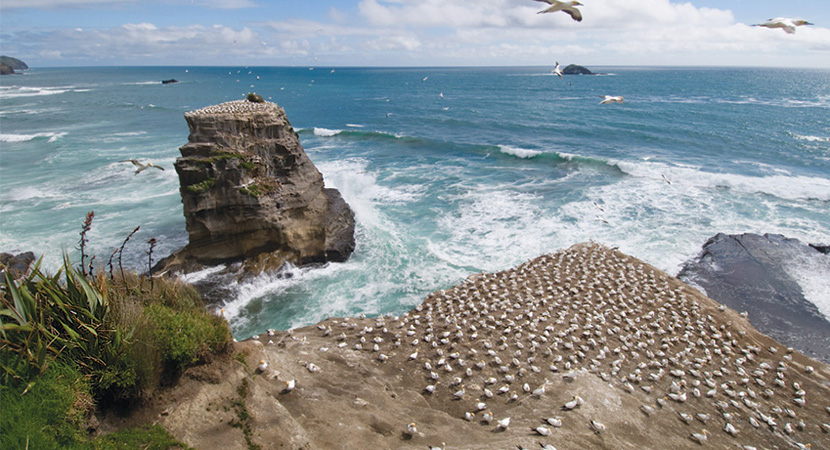 Muriwai Beach - Photo by Muriwai Surf School