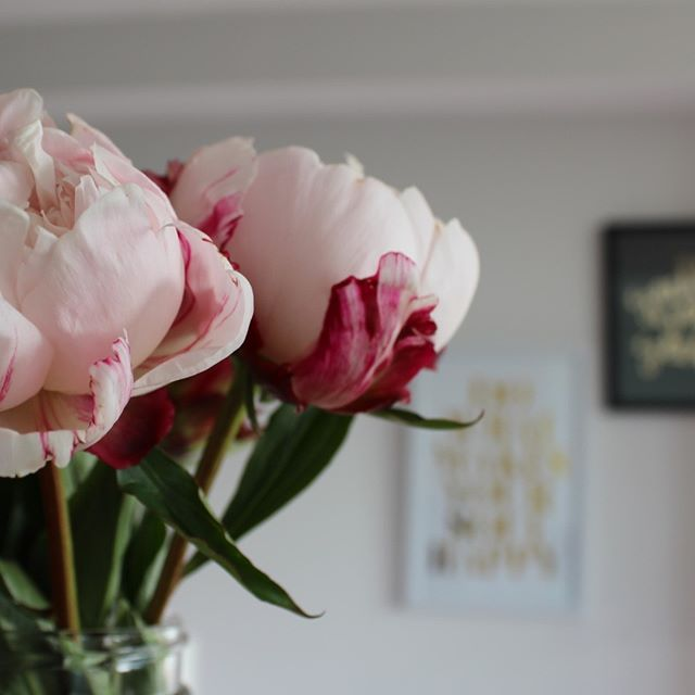 Fresh blooms in the house make it feel so much fresher. I add a drop of @younglivingeoau Thieves Essential Oil to the water, to give the flowers and extra few days before they begin to wilt.⠀⠀⠀⠀⠀⠀⠀⠀⠀ .⠀⠀⠀⠀⠀⠀⠀⠀⠀ .⠀⠀⠀⠀⠀⠀⠀⠀⠀ .⠀⠀⠀⠀⠀⠀⠀⠀⠀ .⠀⠀⠀⠀⠀⠀⠀⠀⠀ .⠀⠀⠀⠀⠀⠀⠀⠀⠀ .⠀⠀⠀⠀⠀⠀⠀⠀⠀ #youngliving #younglivingnz #younglivingeo #younglivingthieves