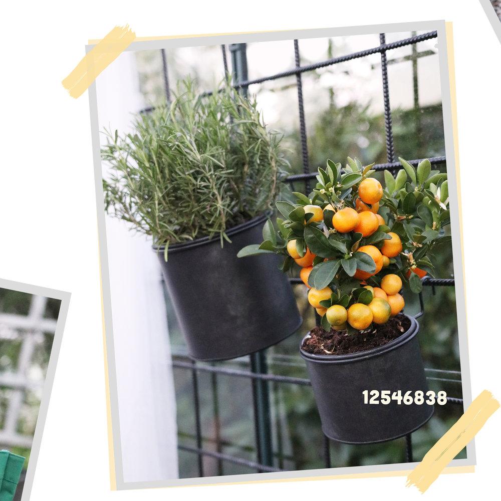 växthus1.jpg