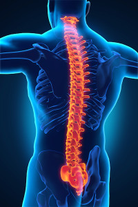 How Your Back is Wired | The Chiropractic Center at Styertowne