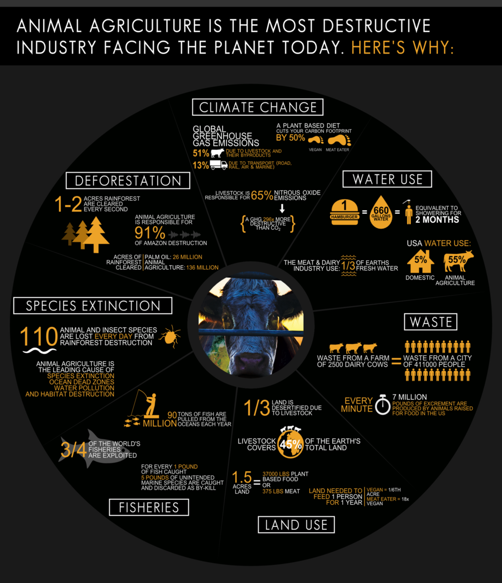 Image source:http://www.cowspiracy.com/infographic