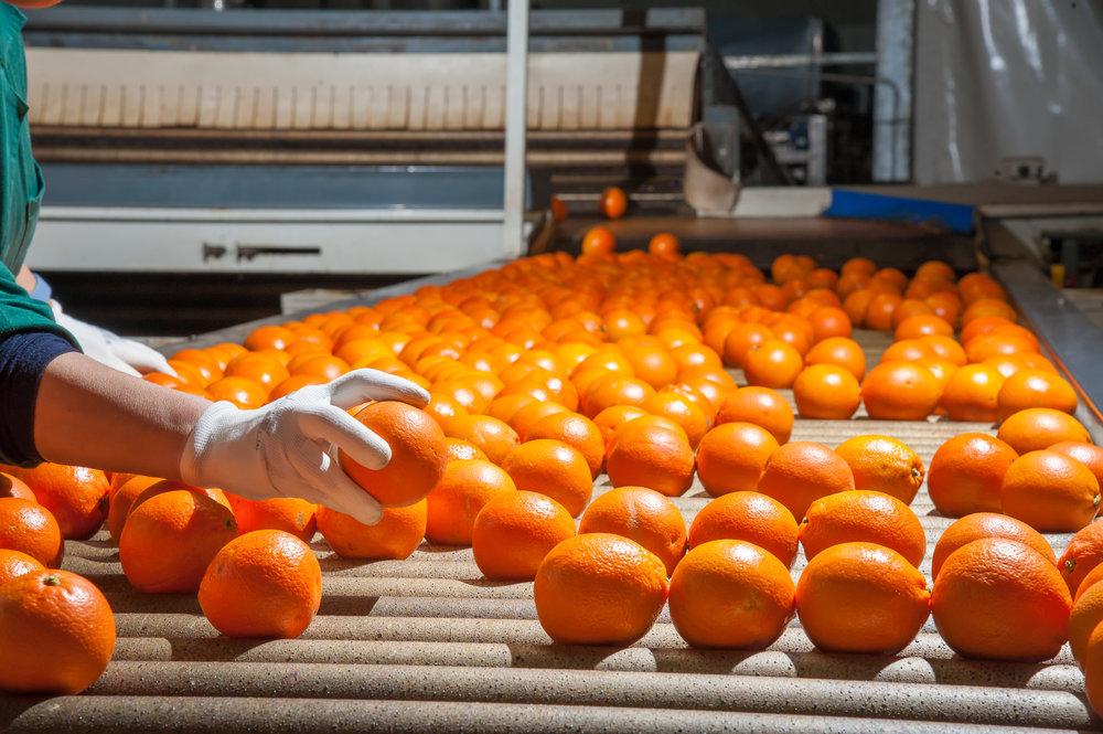 Productie-medewerker - Interesse om te werken in de productie van grondstoffen uit reststromen?Bereid om de handen uit de mouwen te steken in een nieuwe, innovatieve operatie?