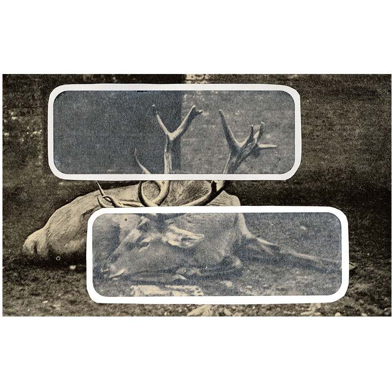 """Overlay Series: Deer , 2006 digital print 24 x 39"""" paper Edition of 3  Inquire >"""