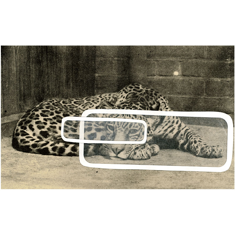 """Overlay Series: Leopard  , 2005 digital print 24 x 39"""" paper Edition of 3  Inquire >"""