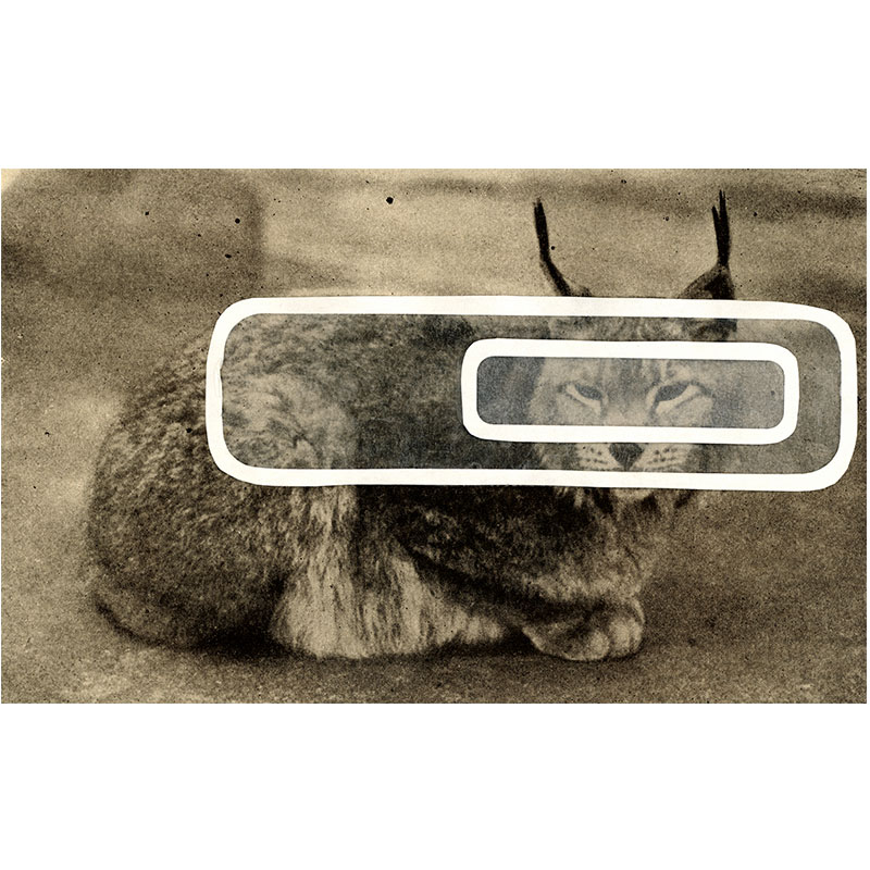 """Overlay Series: Lynx , 2005 digital print 24 x 38. 75"""" paper Edition of 3  Inquire >"""