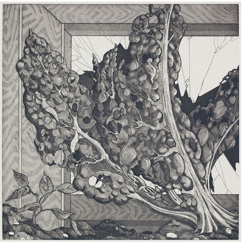 """Swiss Chard , 2010 etching 11.75 x 11.5"""" image 17.25 x 16"""" paper Edition of 10  Inquire >"""