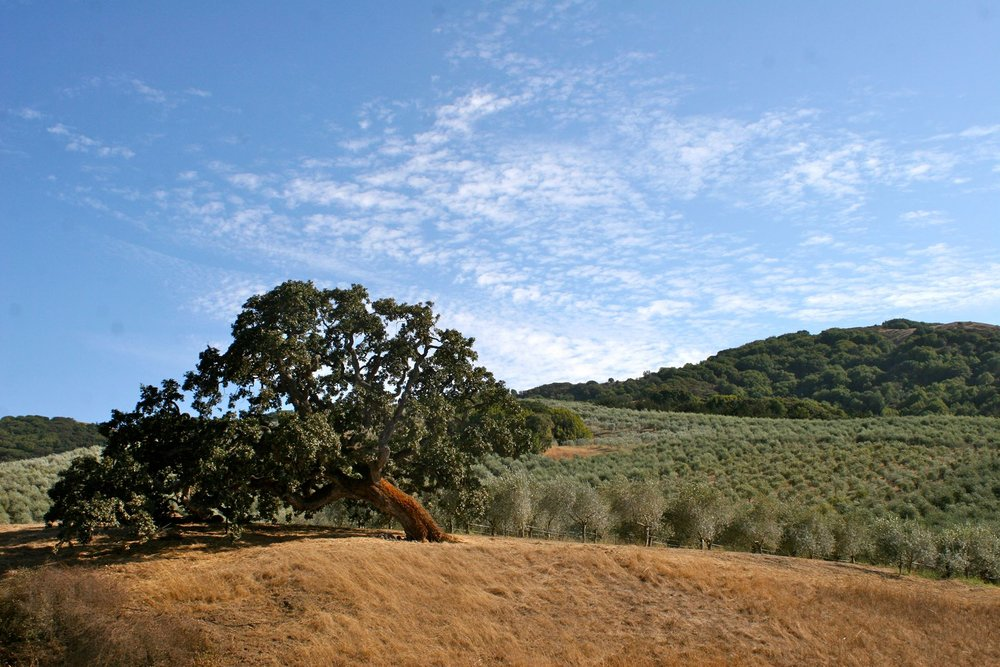 McEvoy Ranch_image 1.jpg