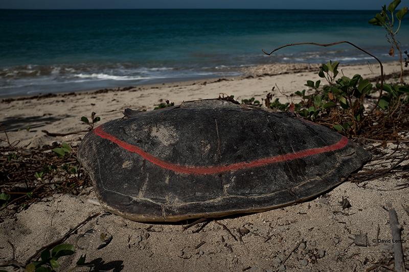 david Lemor-Tortues-Mayotte-03.jpg