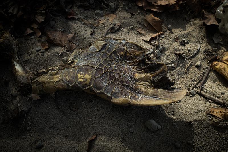 david Lemor-Tortues-Mayotte-02.jpg