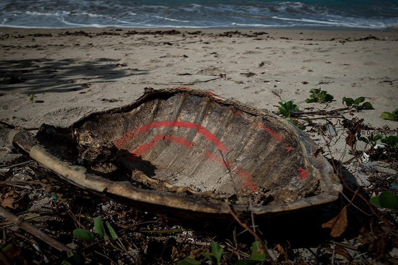 david Lemor - Tortues- Mayotte.jpg