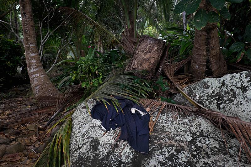 david lemor-jungle2-mayotte.jpg