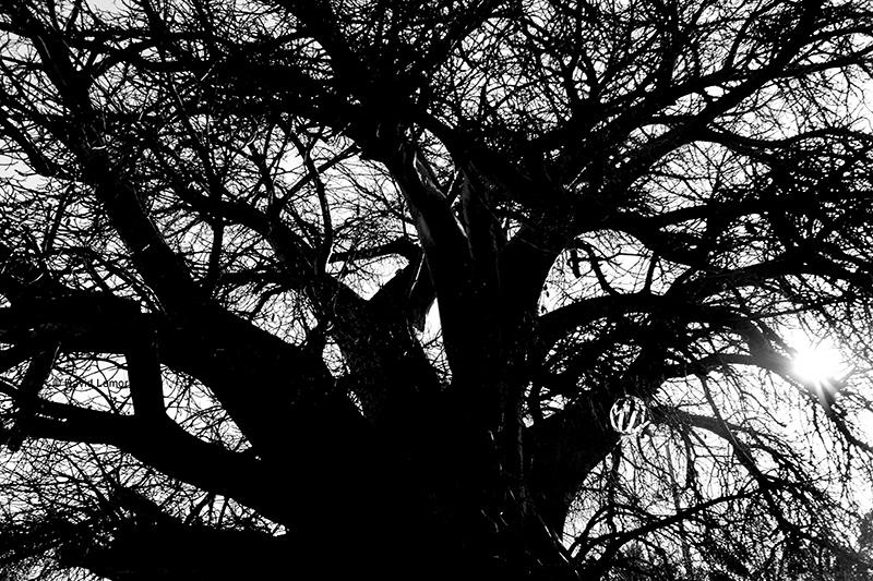 David Lemor-Majunga 42-Madagascar.jpg.jpg