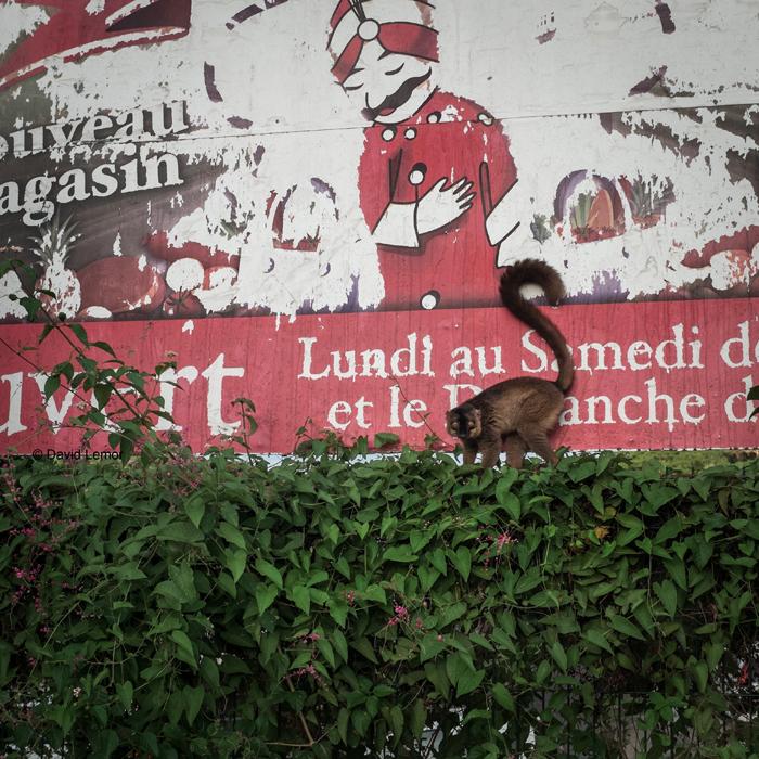 david lemor-kaweni 14-Mayotte.jpg