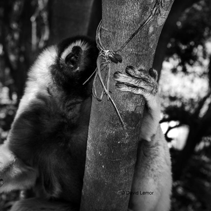 davidlemor-lemurien-Madagascar.jpg