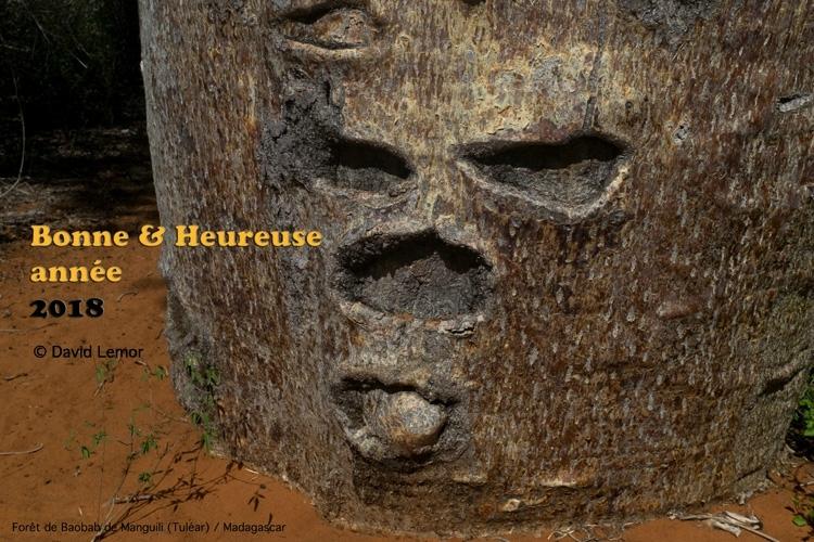 Fôret de Baobab de Manguile ( Tuléar)