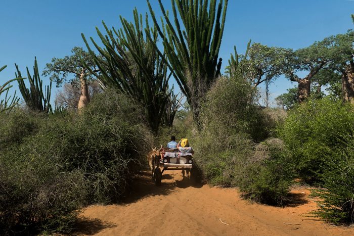 David Lemor-Manguili 05-Madagascar.jpg