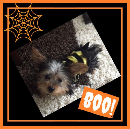 CCAH_Blog_Oct Halloween.png