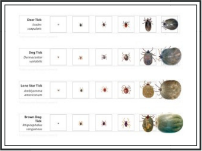 2019_March_tick tips-2.png