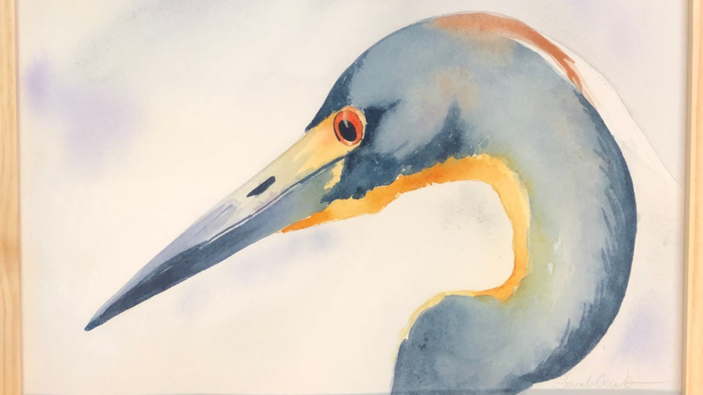 Tricolor Heron by Sarah Combs