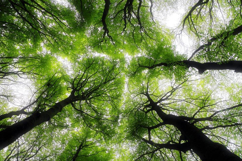 forestbathing.jpg