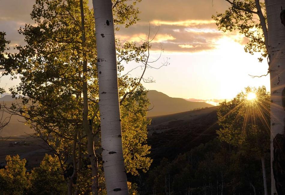 aspens-sunflare-950x650.jpg