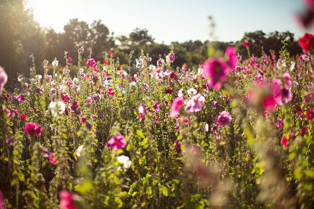 flowers-sun01.jpg
