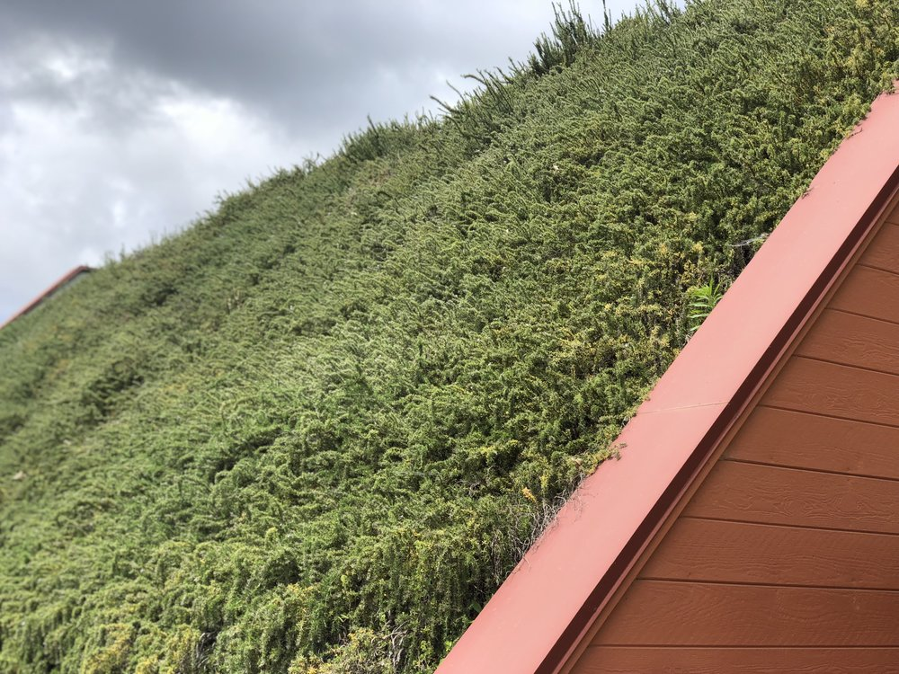 Nalle Winery Living Roof