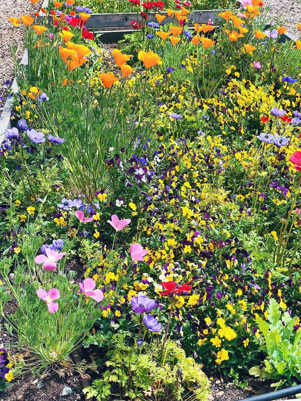 Quivira Sonoma County Flowers
