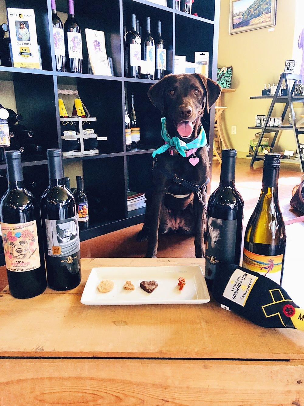 Sonoma Wine Dog At Mutt Lynch Winery