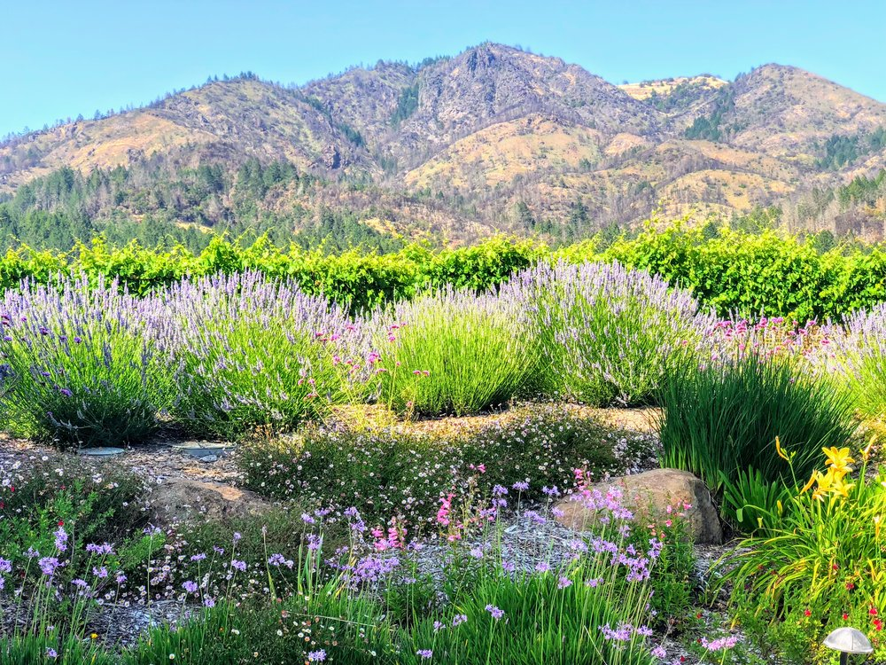 St. Francis Winery Mayacamas Views