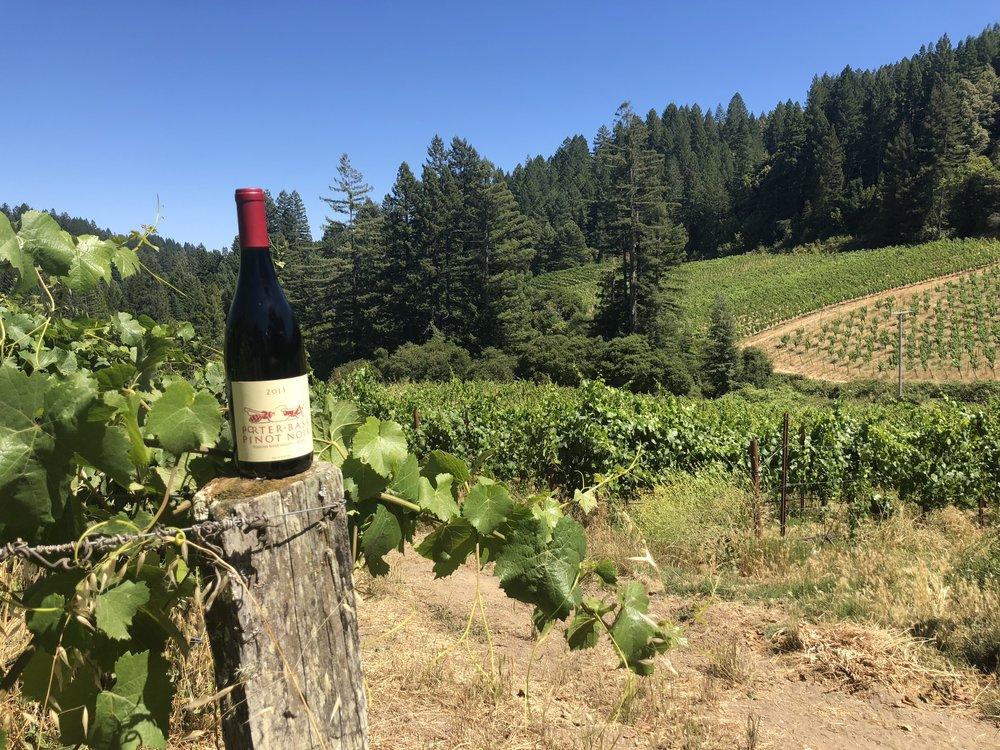 Porter Bass Winery Views