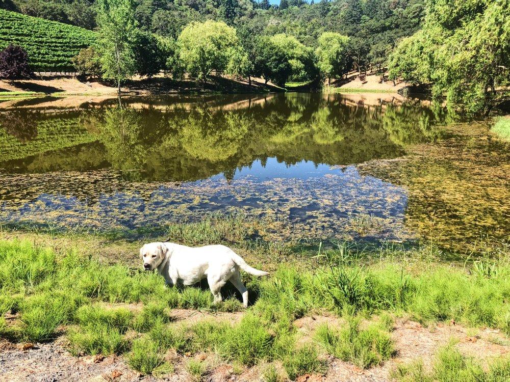 Rafanelli Winery Pond