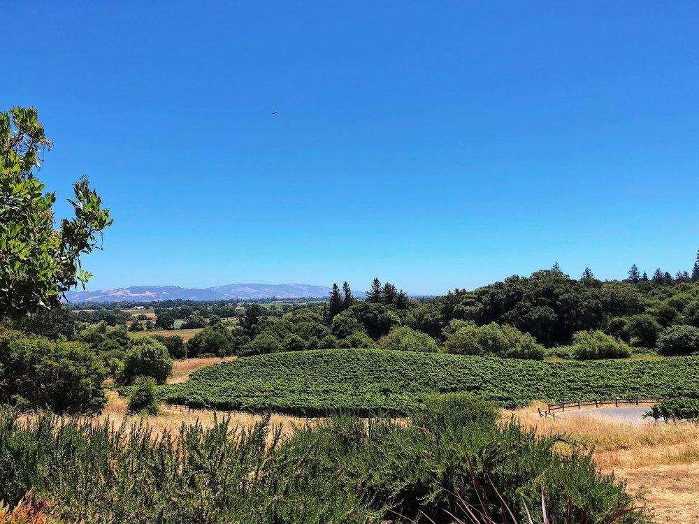 View At Fogcrest Vineyard