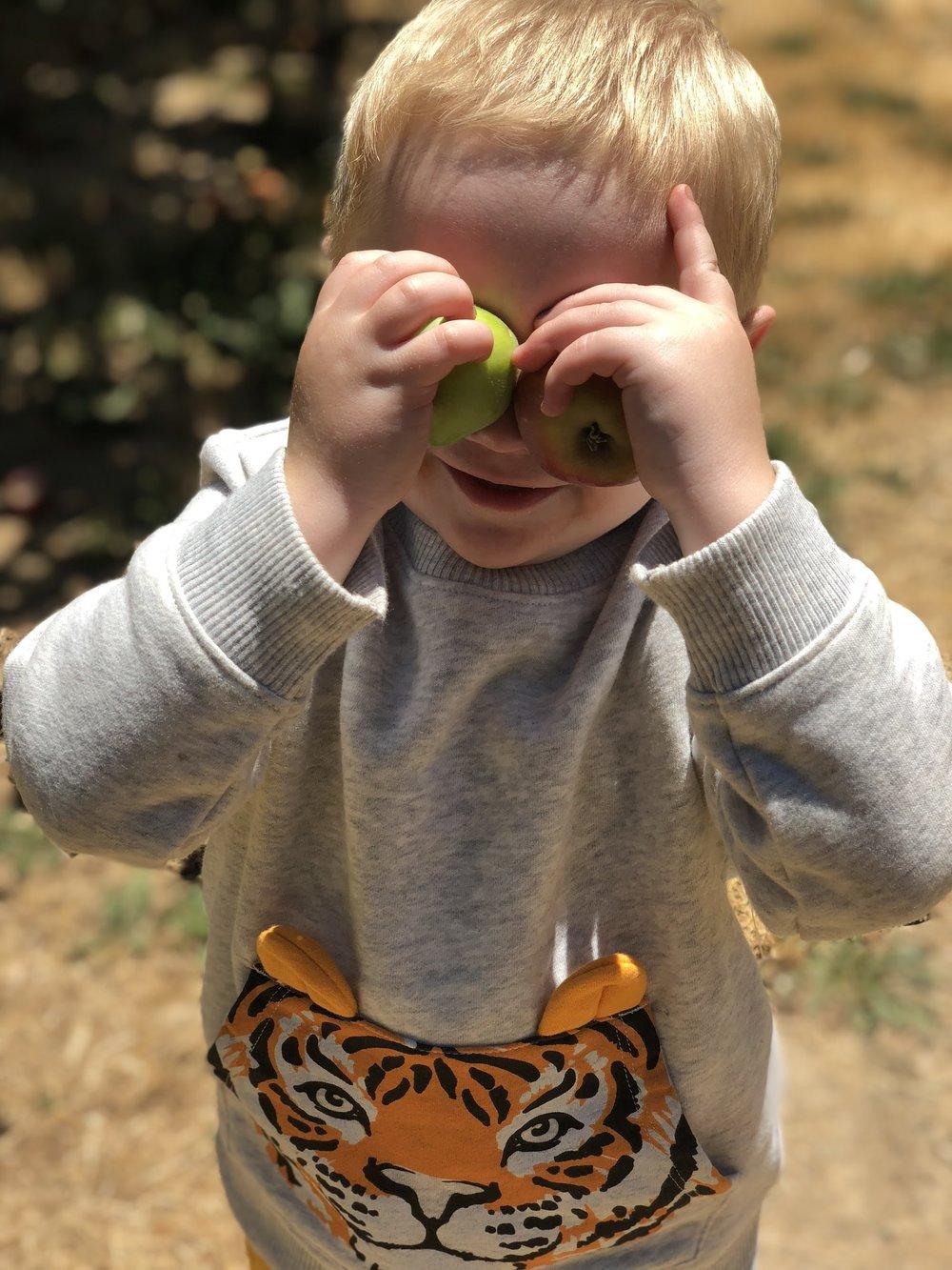 Picking Apples At Horse & Plow Sebastopol
