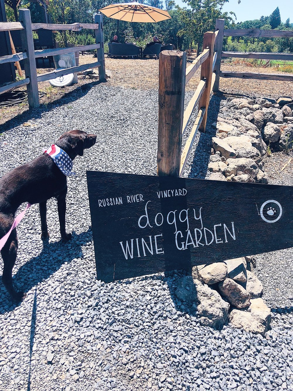 Russian River Vineyards Dog Friendly