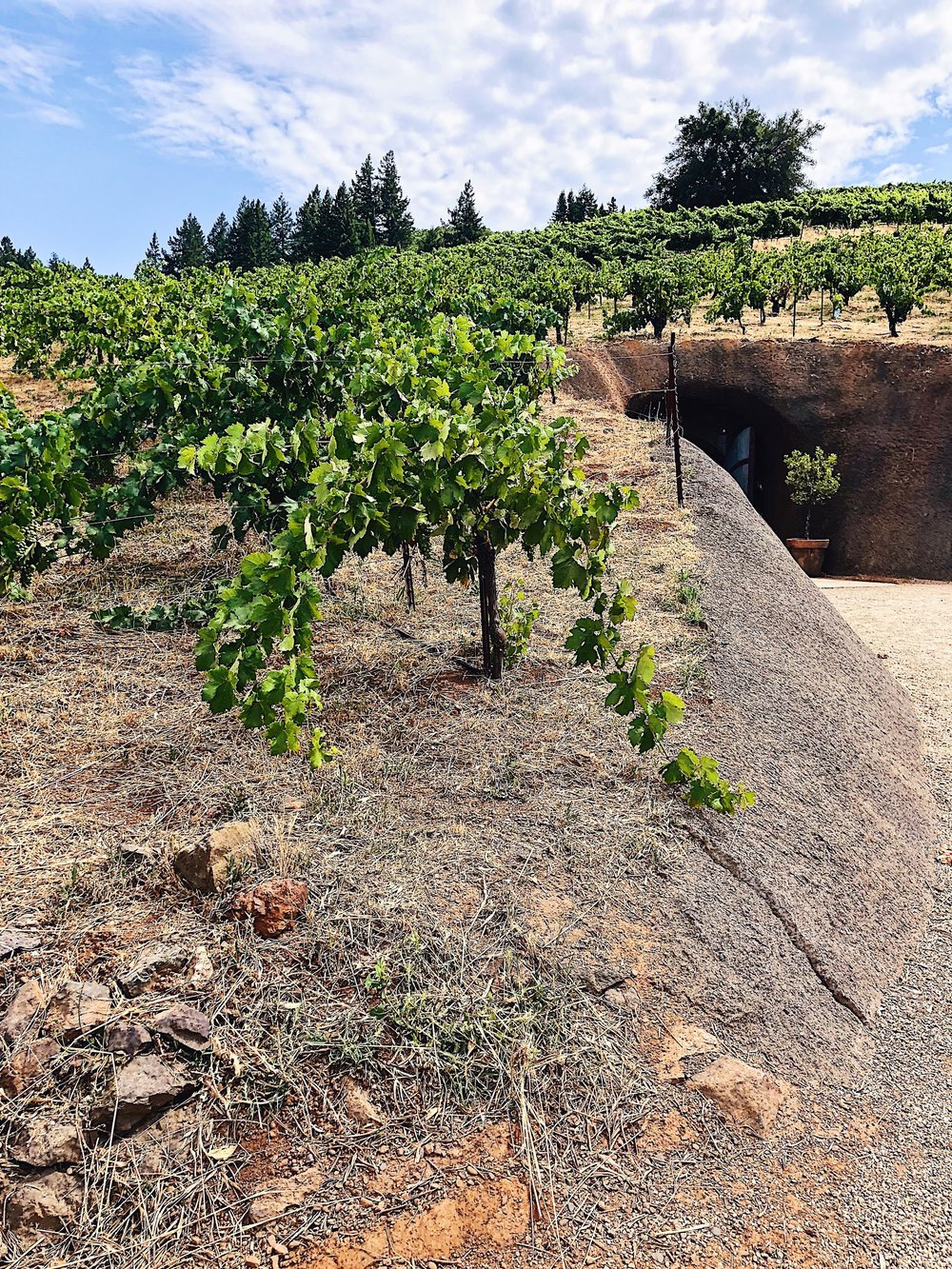Bella Vineyards Old Vine Zinfandel