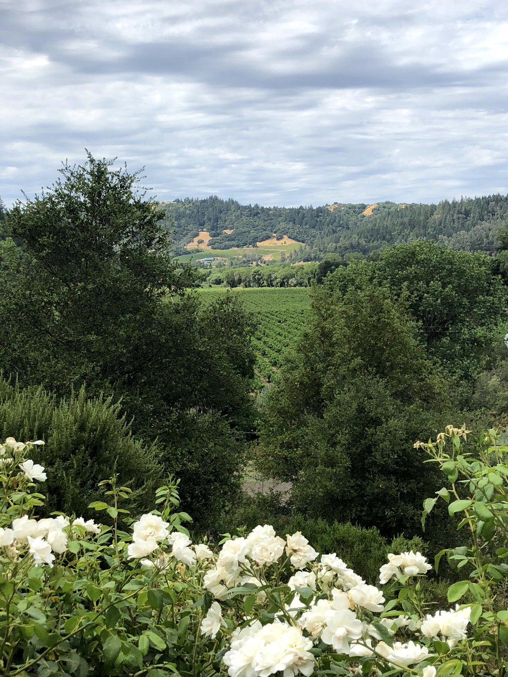 Vineyard Views At Bella Vineyards