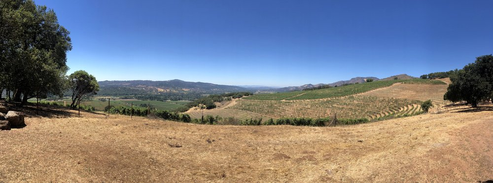 Kunde Winery Views