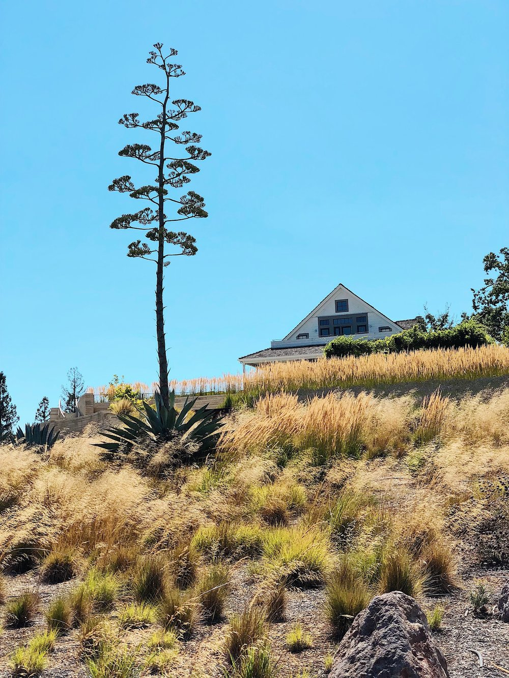 Sonoma County Kistler Vineyards