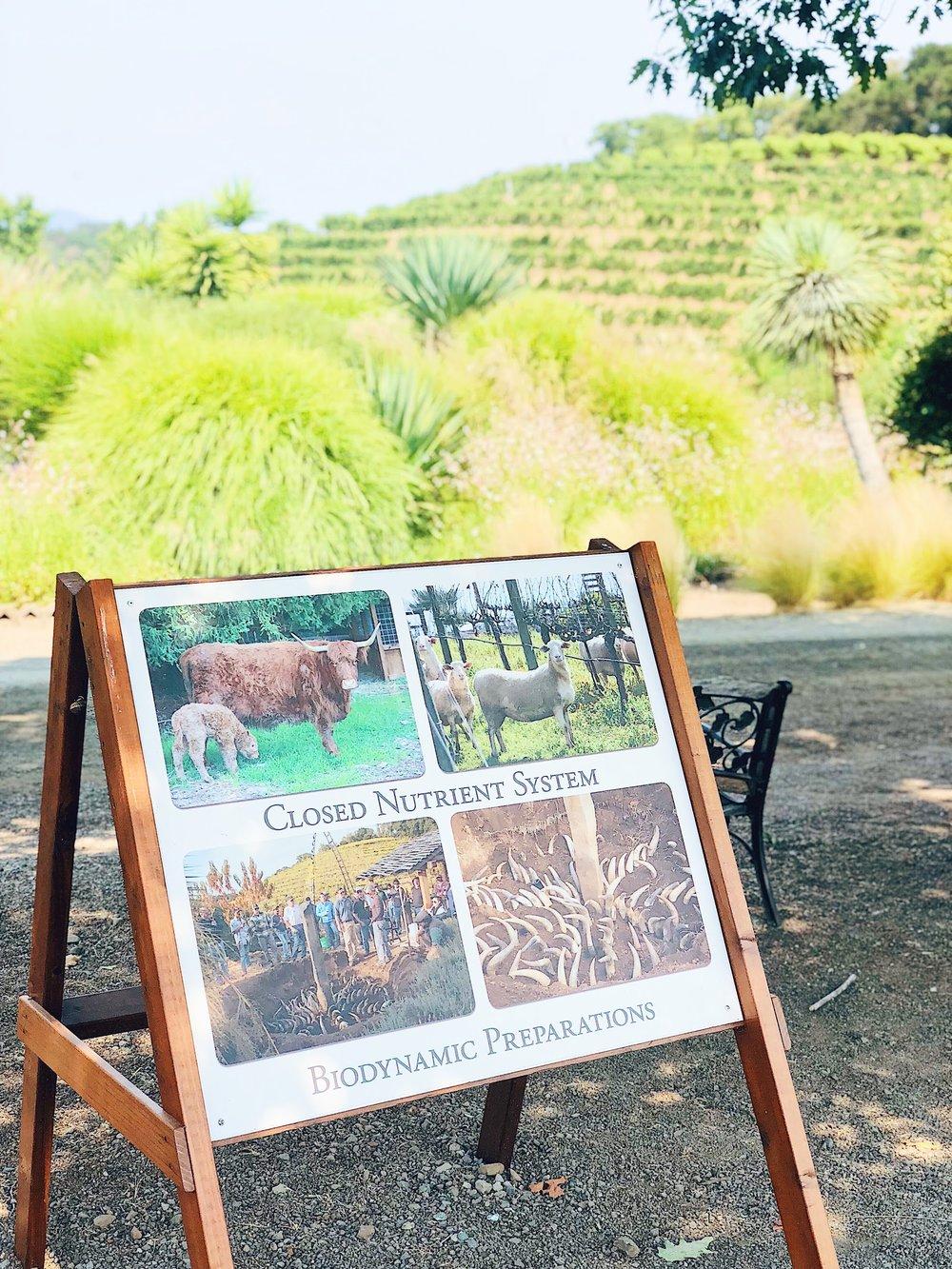 Benzinger Winery Biodynamic